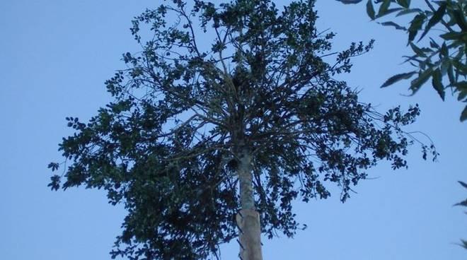 Il matrimonio degli alberi