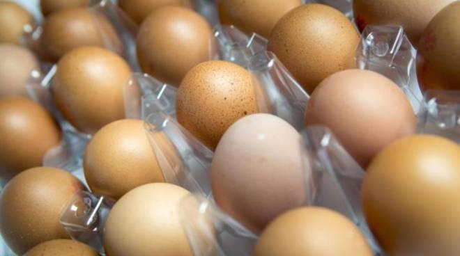 Insetticida nelle uova