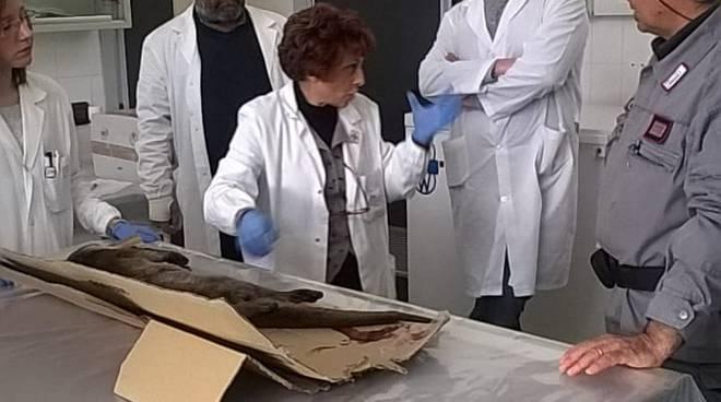 Lontra ritrovata ad Avigliano