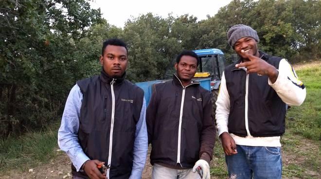 Giovani africani vendemmia