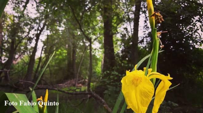 Foresta incantata, Bosco Pantano