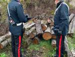 Legna carabinieri