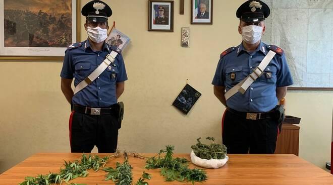 Piante di marijuana sequestrate