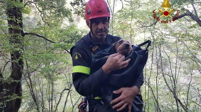 Salvataggio cane Vigili del Fuoco