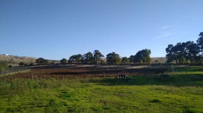 Piantumazione alberi, Parco Murgia materana