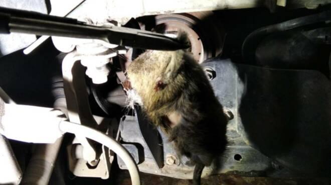 Topo nel motore