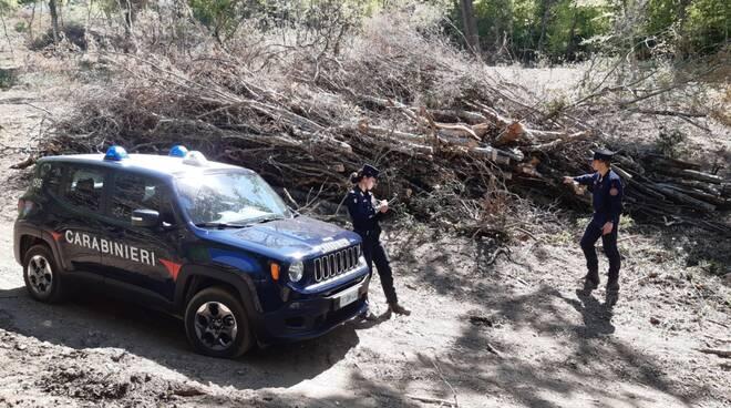Carabinieri Aliano bosco