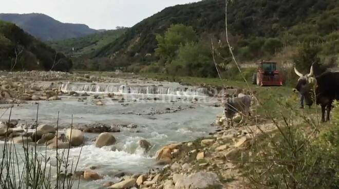 fiume sauro