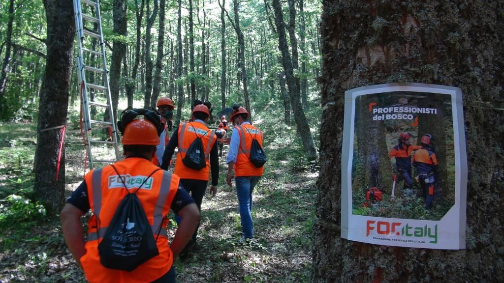 forestazione forestali